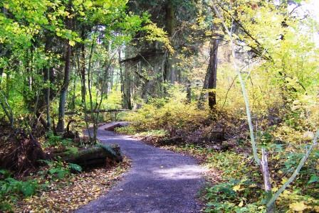 Point Whitehorn Trail in the Fall